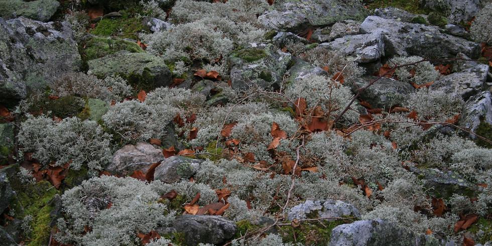 Découverte des champignons et des lichens au Mont Felletin