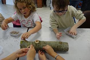 atelier myciculture