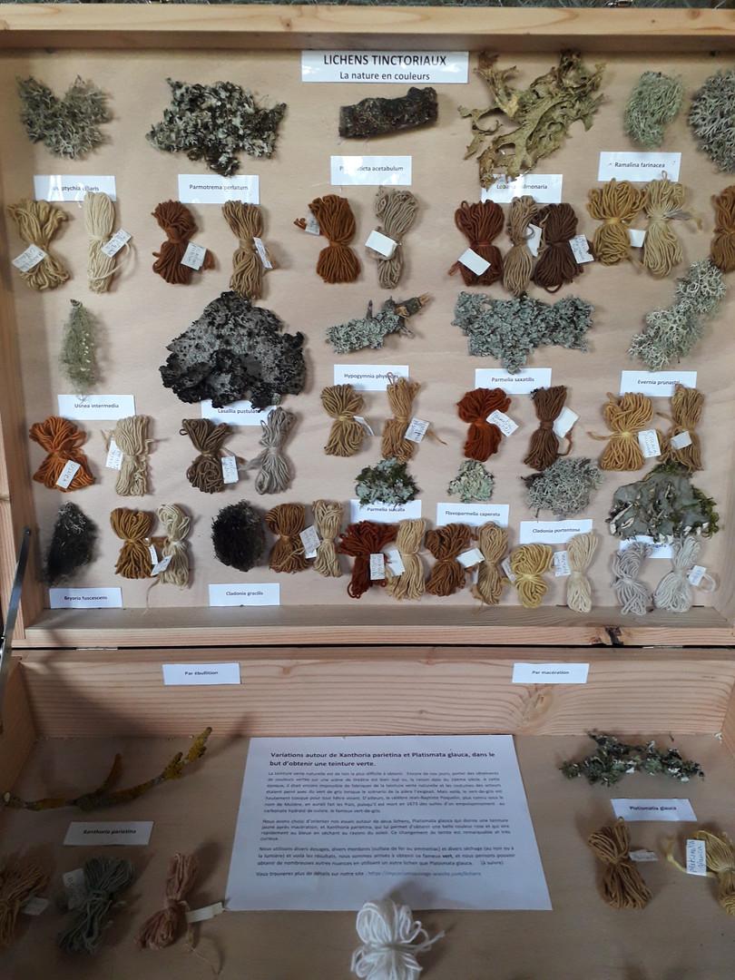 Lichens tinctoriaux