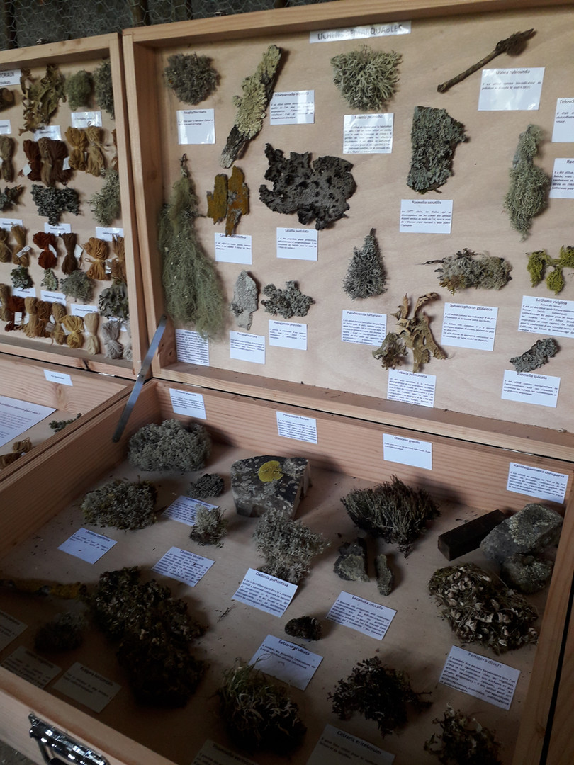 Lichens remarquables