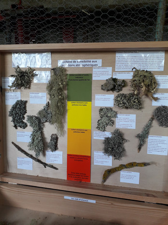 Echelle bio indicateur d'air pur