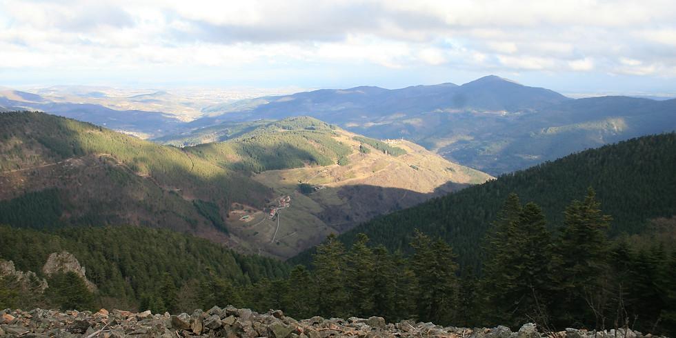 Découverte des lichens au mont Felletin