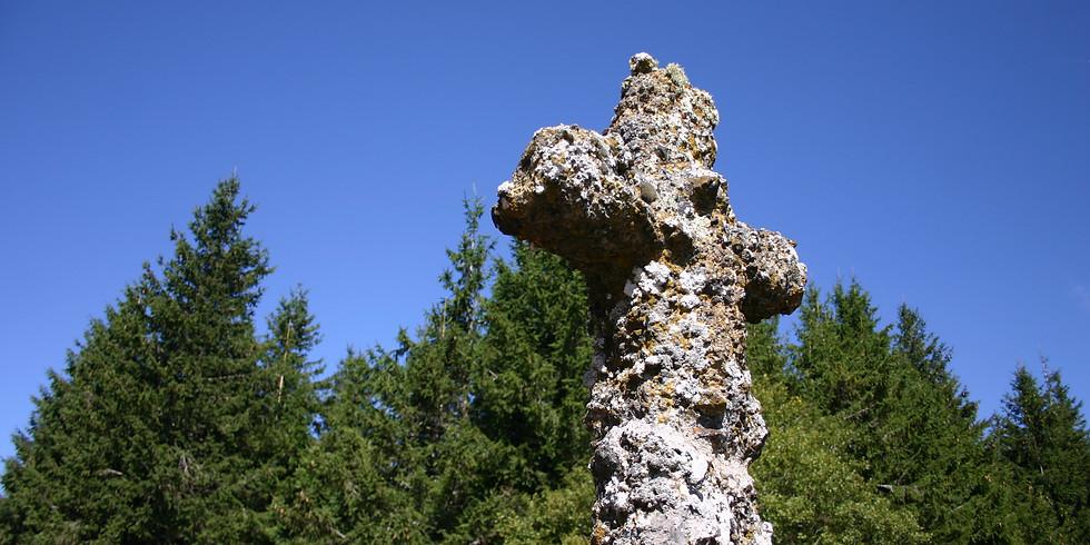 Découverte de la flore et des lichens au Mezenc