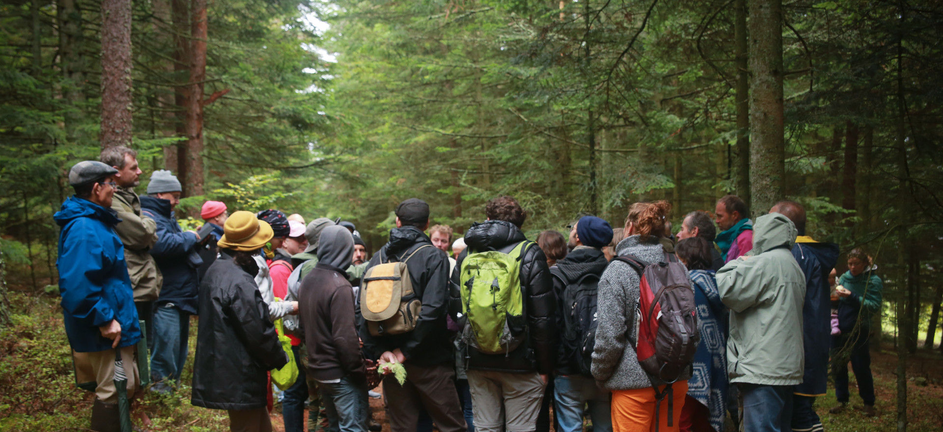 Les champignons et les lichens, abordés le plus simplement possible.