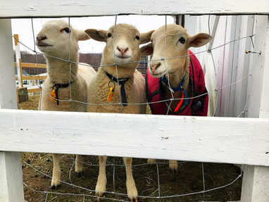 West Place Animal Sanctuary open for tours Aug. 5 Rare opportunity to meet Westport Case residents