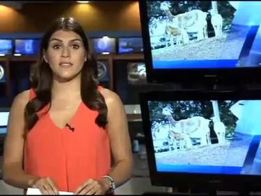 ABC 6 News story