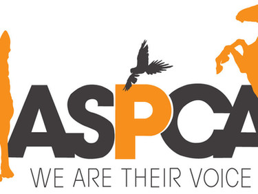 ASPCA Places Nearly 230 Animals from Westport, Mass. Cruelty Case with Rescue Groups
