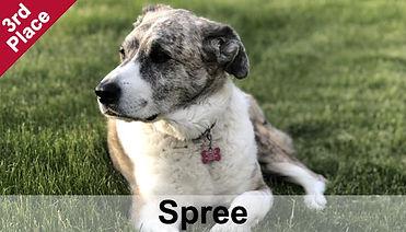 Spree_3rdPlace.jpg