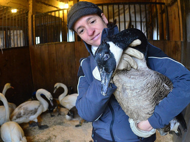 Recovery Room: Winter's winged victims flood animal sanctuary