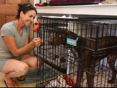 A PLACE FOR ALL West Place now helps lost dogs in Tiverton and Little Compton, RI