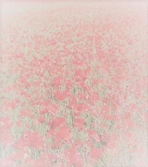 poppy3.jpg