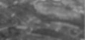 MCG 1952 PIC 2.PNG