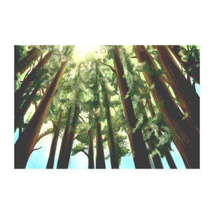 03redwoods_FINAL.png