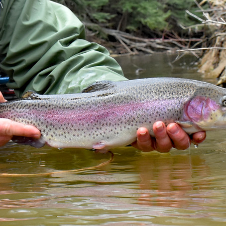 Swinging Streamers and Wet Flies