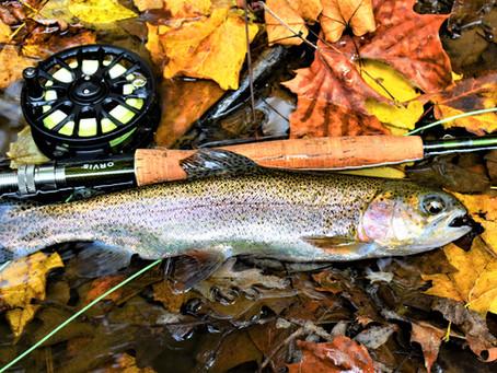 Fishing Neshannock Creek