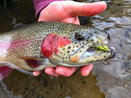 Early Season on Buffalo Creek