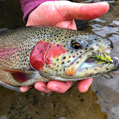 Early Season on Buffalo Creek
