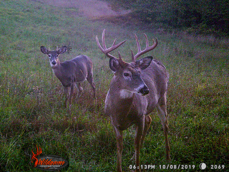 Six Factors that Influence Deer Movement