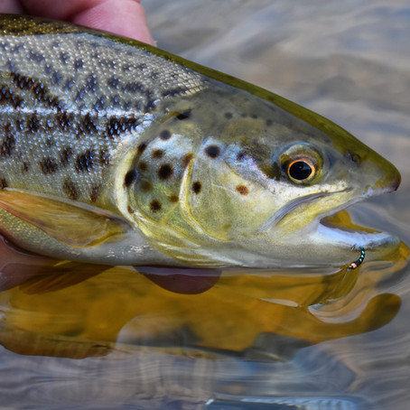 """4 Tips for Fishing with """"No See Ums"""""""