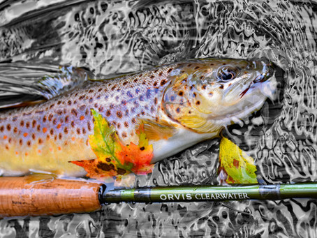 5 Tips for New Fly Fishers