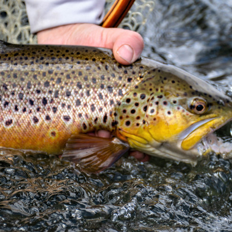 The Keystone Fly Fisher e-Newsletter