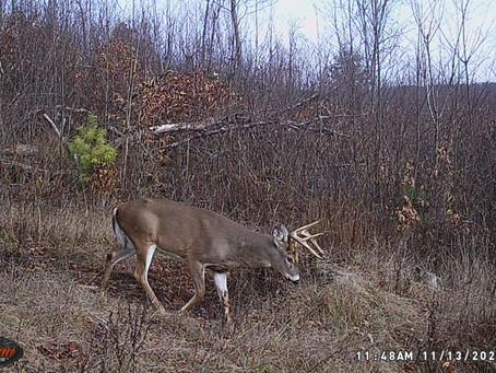Trail Camera Studies: Predicting Last Year's Rut