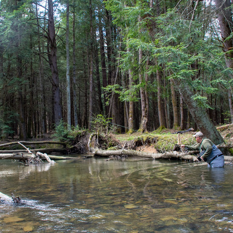 Exploring the Hickory Creek Wilderness