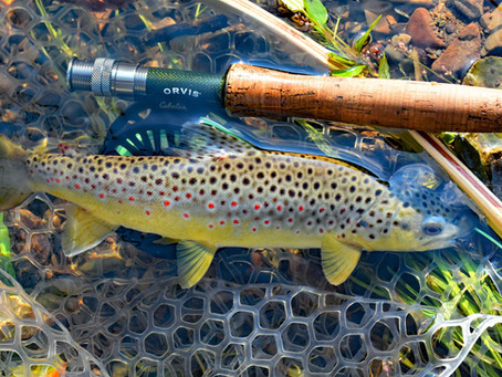 Fly Fishing in Elk Country