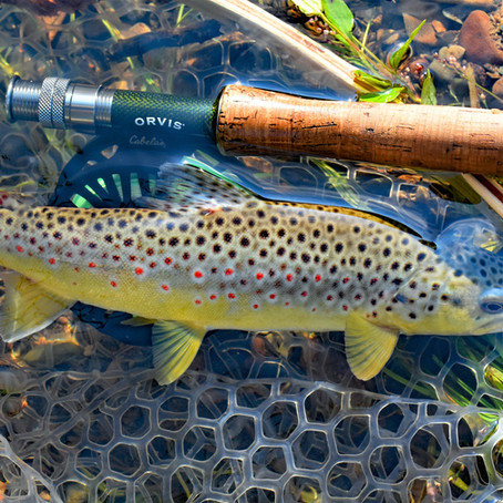 Fly Fishing in Elk Country