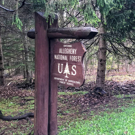 A 3-Stream Tour of the Allegheny National Forest