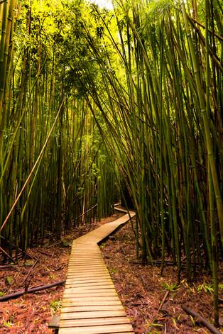 one path