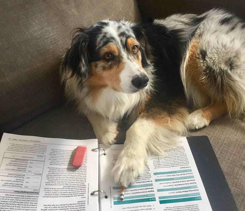 Sailpaddle's Homeschooled Dog
