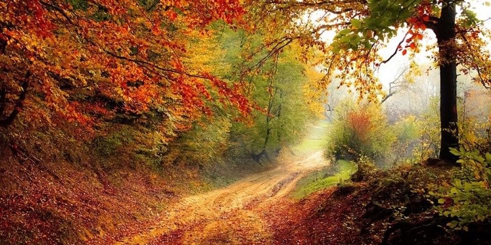 Heerlijke Herfst Reset - Bezinningsweekend