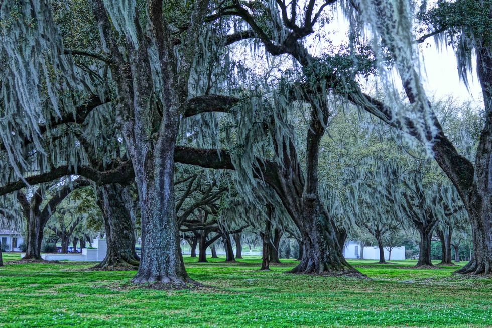 manreasa oaks 3 web.jpg
