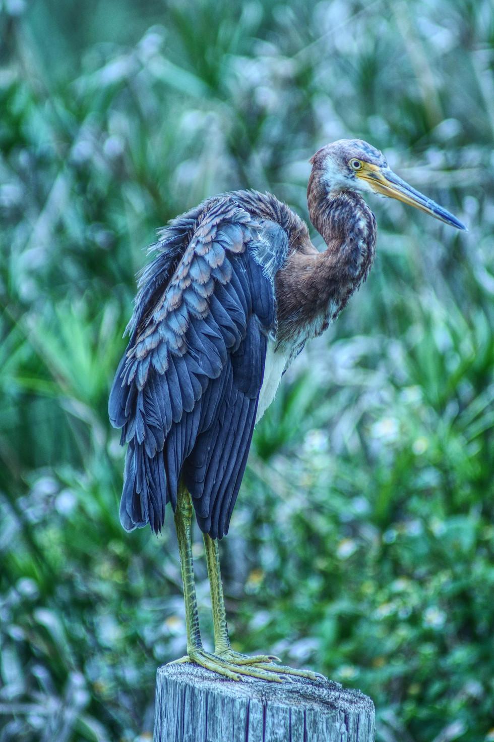 Fla Bird