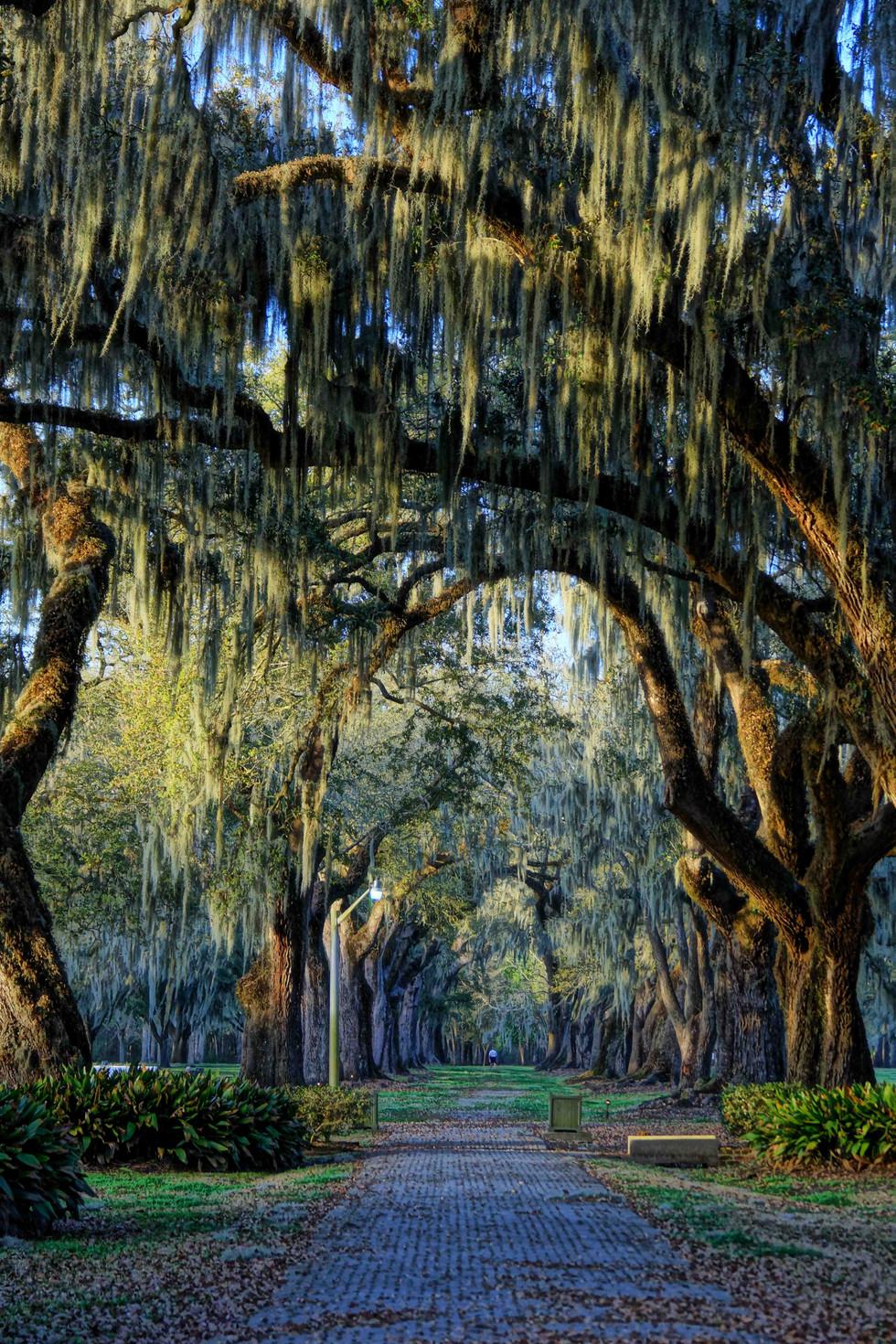 manreasa oaks 6 web.jpg