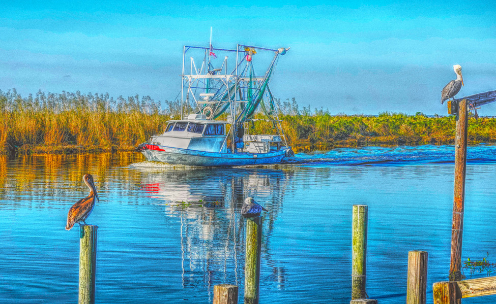 Pelicans and boats web.jpg