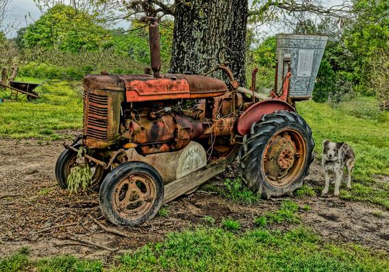 Web Final Tractor Dog background.jpg