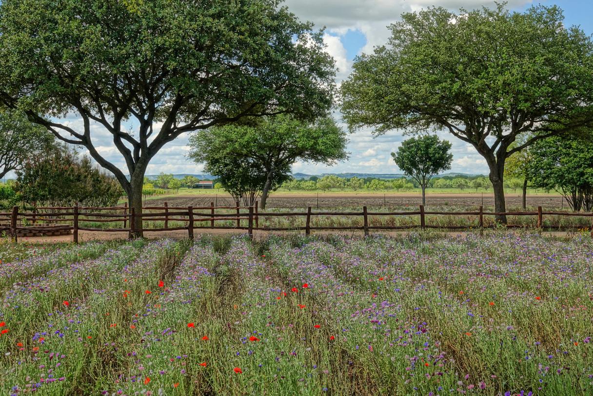 Wildflower Farm 1