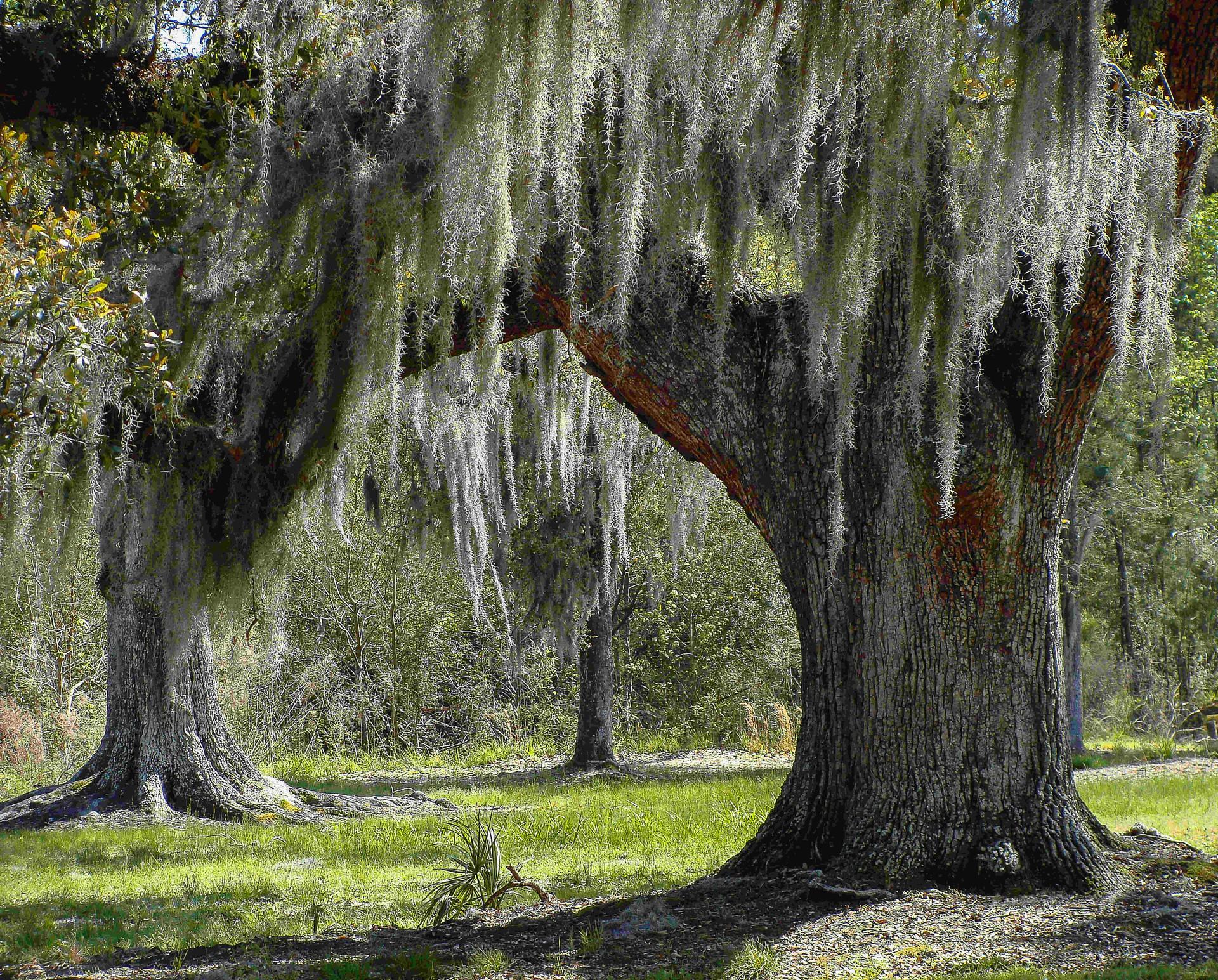 larry pics-1 Oak tree web copy.jpg