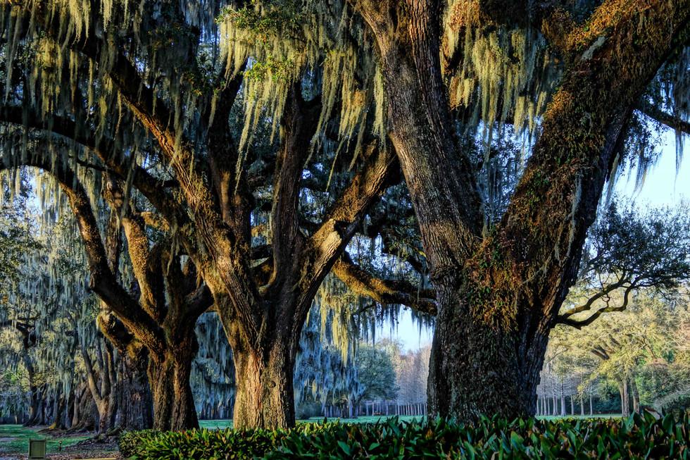 manreasa oaks 8 web.jpg