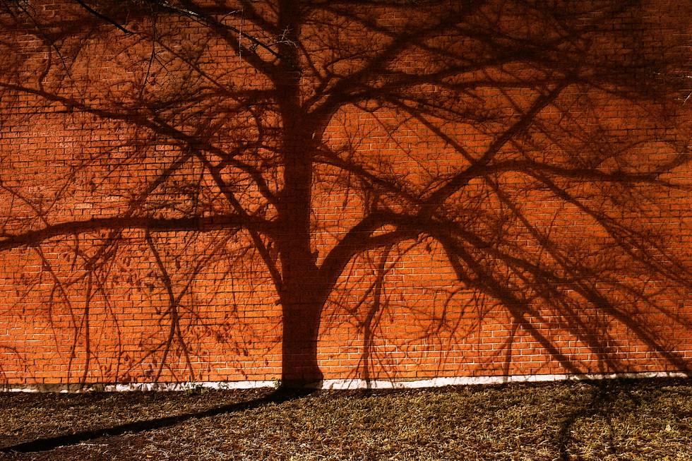 webbric tree1.jpg