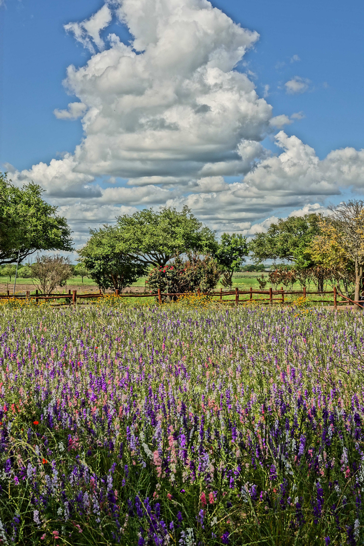Wildflower Farm 3