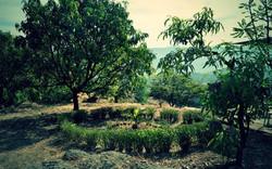 Green Bricks - Gondhav Green