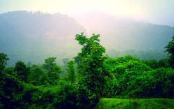 Green Bricks - Rio Vista