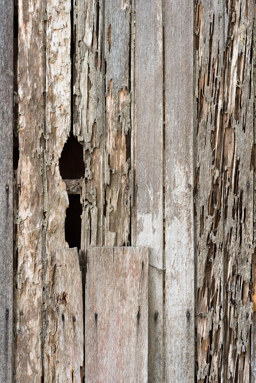 wooden termites, destroyed wood