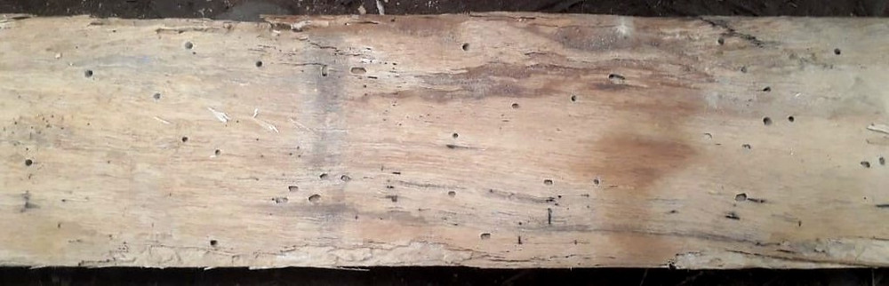 woodworm on wood