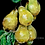 Thumbnail: PAINTING OF PEARS ON A PEAR TREE Poster