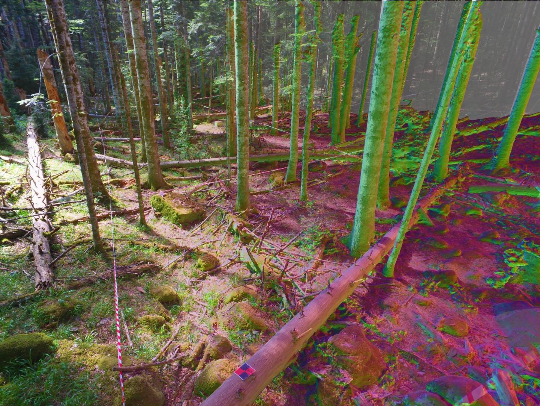 Levantamiento de parcelas forestales