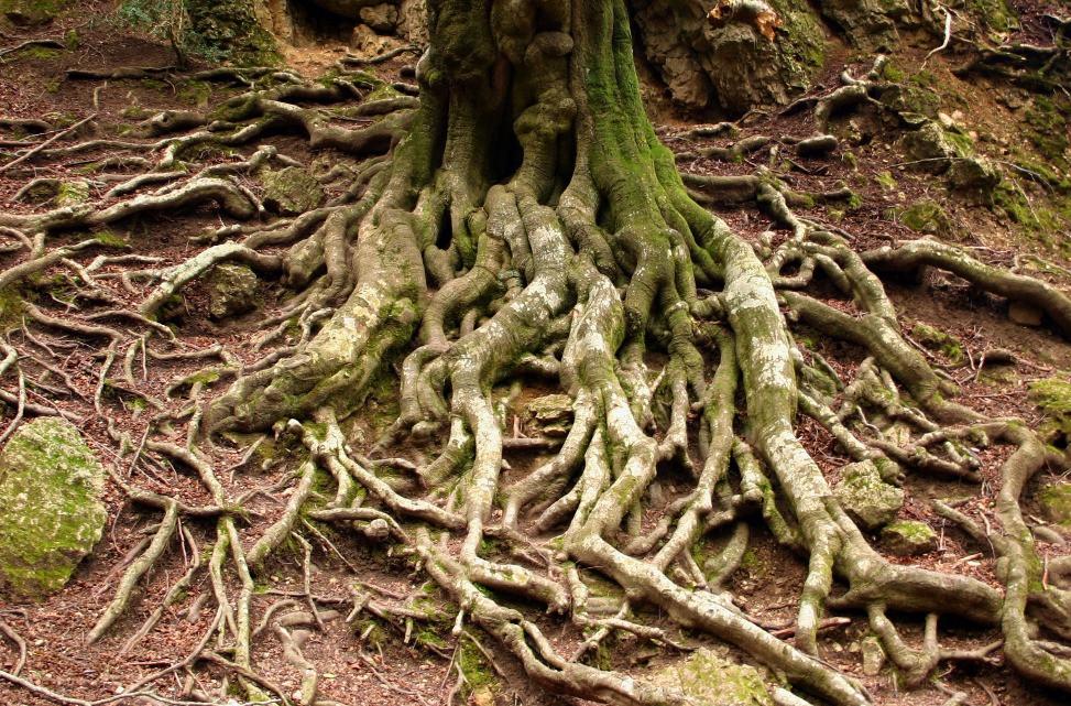 Aixecament 3D i seguiment d'arbres singulars